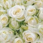 Servilletas Rosas Blancas